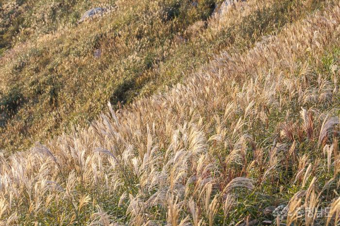 가을 억새 명소, 홍성 오서산