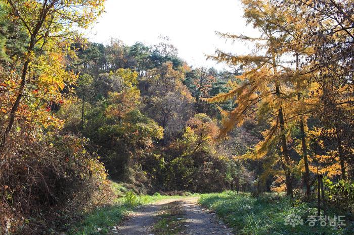 아름다운 산책로, 재너머숲길