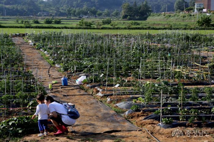 텃밭 가꾸며 농업의 소중함 배워요 사진