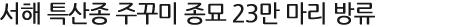 서해 특산종 주꾸미 종묘 23만 마리 방류