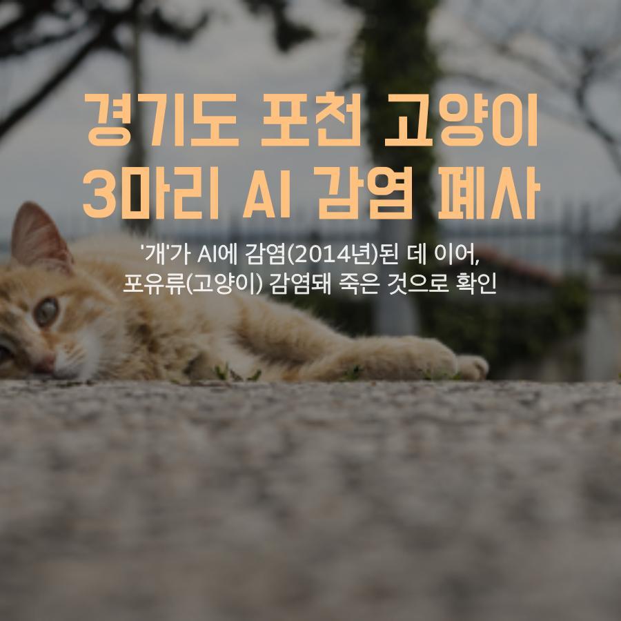 [농림축산식품부] AI 조류에서 고양이로, 사람은 안전할까요? 이미지 2