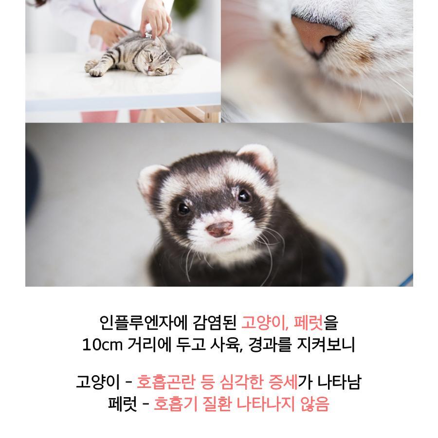 [농림축산식품부] AI 조류에서 고양이로, 사람은 안전할까요? 이미지 6