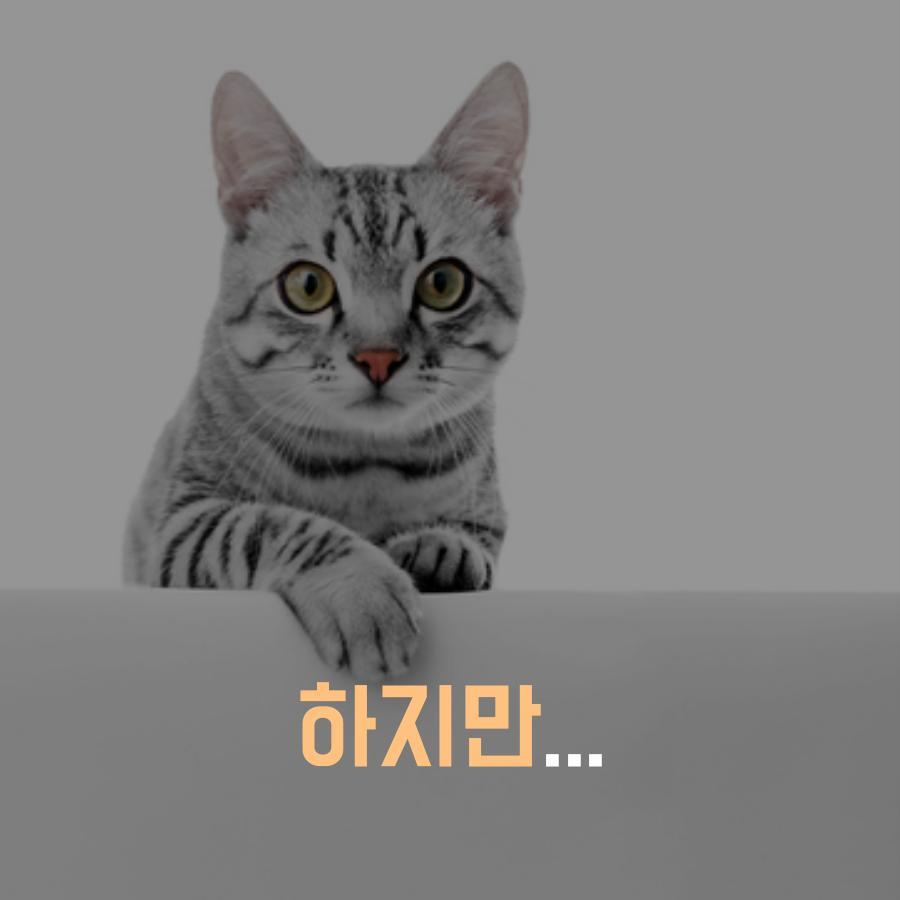 [농림축산식품부] AI 조류에서 고양이로, 사람은 안전할까요? 이미지 3