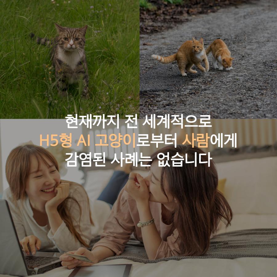 [농림축산식품부] AI 조류에서 고양이로, 사람은 안전할까요? 이미지 4