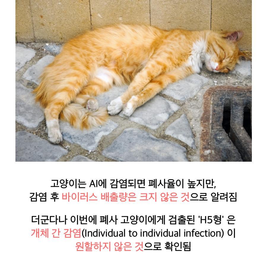 [농림축산식품부] AI 조류에서 고양이로, 사람은 안전할까요? 이미지 7